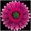 FlowerCare joc